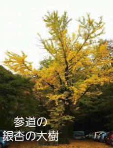 銀杏の大樹