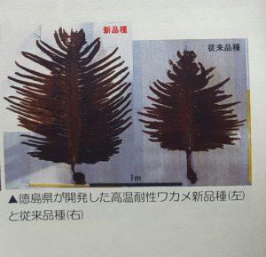 わかめ2種20170509